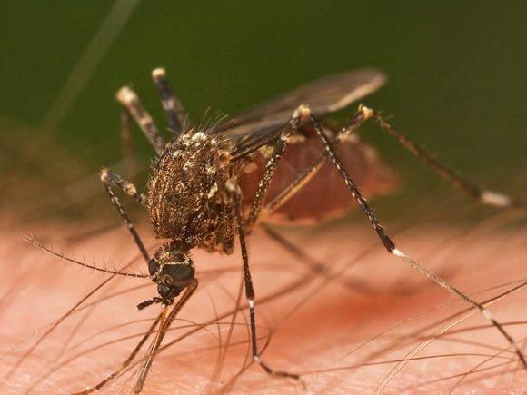 Fighting Malaria Through Videogames