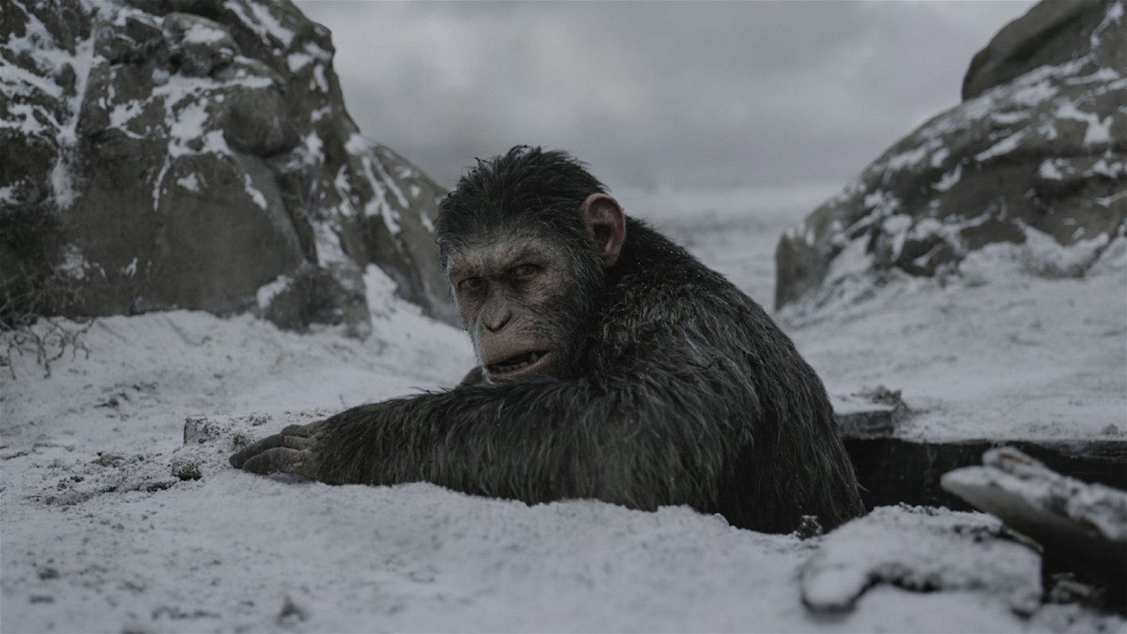 War For The Planet Of The Apes (Movie) Review 3